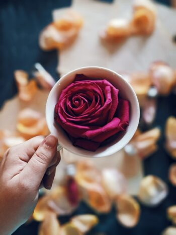This is an image of a pretty, blossomed red rose sitting in and filling up a tea cup as a woman's hand holds it by the handle.