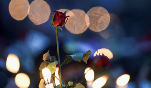This is a photograph of a red roses surrounded by candles.